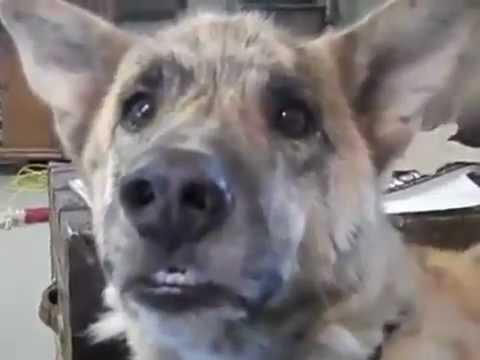 Chú chó biết nói tiếng người nè_tunguyen268.flv