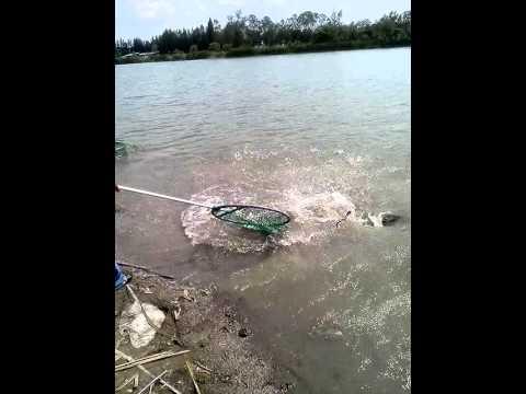 ตกปลาชะโดที่บางปะหัน