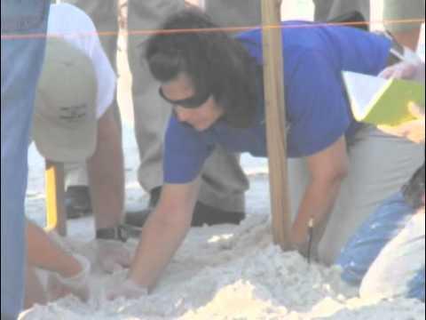 National fish and wildlife foundation gulf turtle rescue for National fish and wildlife foundation
