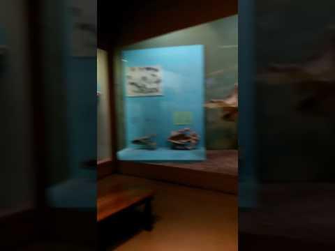 Peabody museum 😘