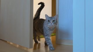 아침 인사 하러 침대로 찾아오는 고양이들