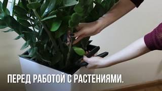 Ядовитые комнатные растения ЛайфХак по правильному уходу