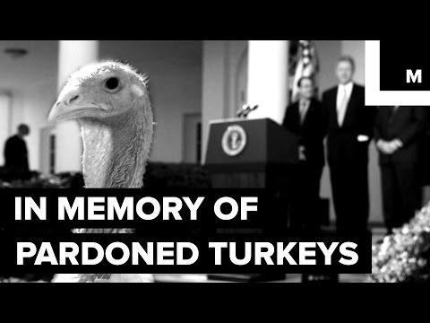 In Memoriam: The Short Life of Turkeys Pardoned By Presidents