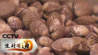 《生财有道》生态中国沿海行 讨小海 品海鲜 尽享鲜甜三门 20200727 | CCTV财经 - YouTube