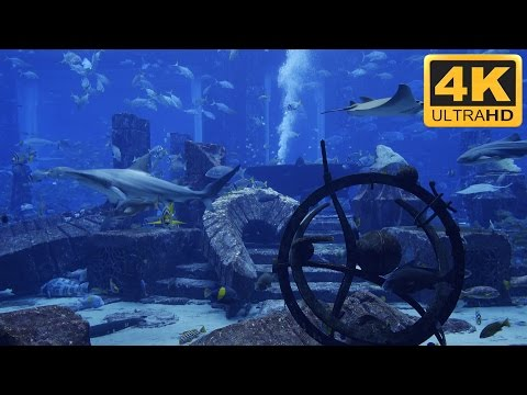 ★-★-★ 4K Shark Tank with Manta Rays and Big Fish ★-★-★
