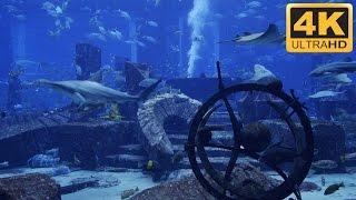 ★-★-★ 4K Shark Tank with Manta Rays and Big Fish ★-★-★