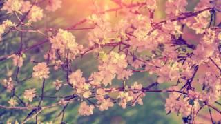 Música Relajante para el Alma con Flauta | Música Instrumental para Relajarse y Meditar | Relajación