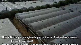 """Costretti a nutrirsi con cibo scaduto raccolto dalla spazzatura vicino ai supermercati, ricevevano minacce di morte quando si rivelavano """"jarca"""", cioè inutili. Nelle intercettazioni della polizia emer"""