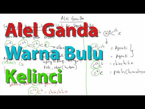Video Pembelajaran Alel Ganda Pada Kelinci ( Agouti, Chincilia, Himalaya, Albino)