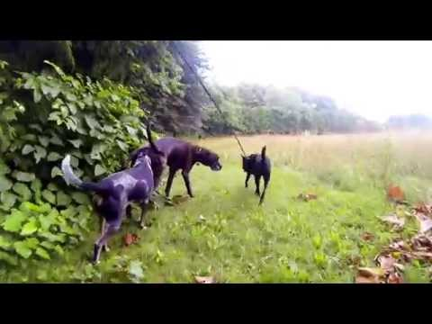 Leash Leader 7/16/14 Southborough Chatham, Dixie, Pepper, Lucy