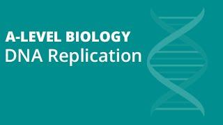 DNA Replication | A-level Biology | OCR, AQA, Edexcel