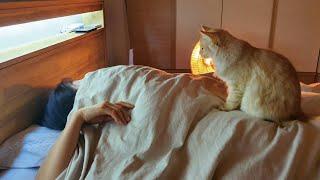 고양이와 함께자면 벌어지는 일