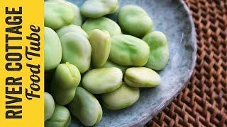 Growing Tips: Broadbeans | Will Livingstone
