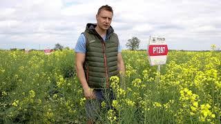 Demo Farma w Wilczyńcu koło Dobrzycy  firmy Corteva z odmianami rzepaku marki Pioneer