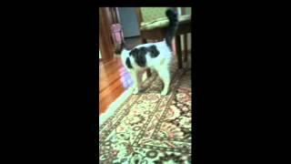 Обзор и слайды кота с именем Рамазан