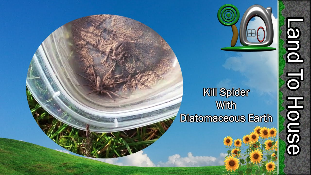 Kill Spider with Diatomaceous Earth - YouTube