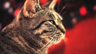 Cat singing rock