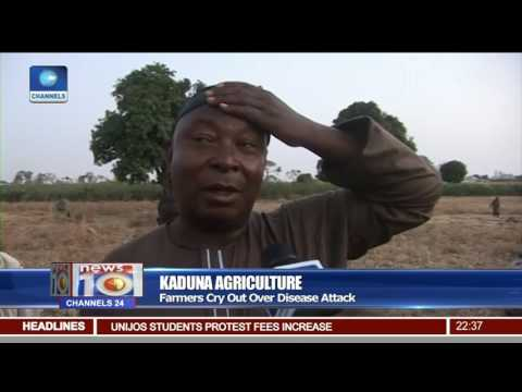 Kaduna Agriculture: Tomato Ebola Has Destroyed Hundreds Of Farmlands