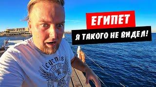 Египет Погода сейчас Я такого не видел Риф в отеле Albatros Palace Хургада Интернет в Египте