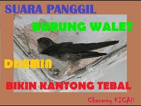 SUARA PANGGIL RAJA WALET KALIMANTAN TERBARU 2018