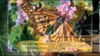 Урок Бабочки. Помогая, не навреди.