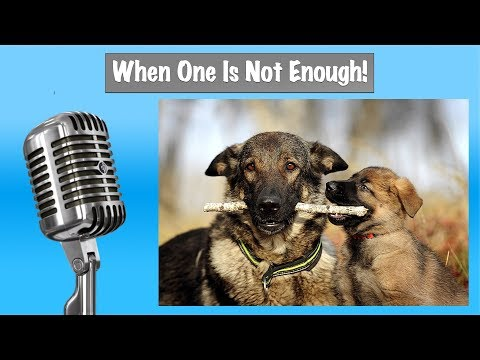 Adding Another Dog To Your Home - Dog Training Podcast