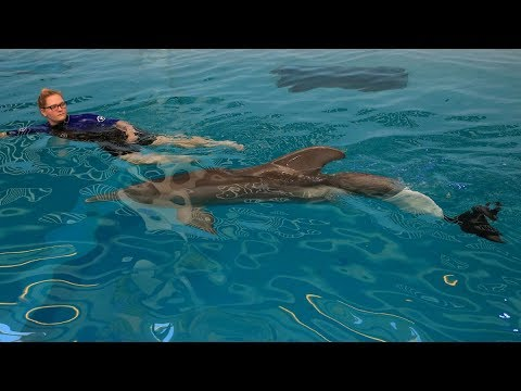 The Technology Behind Winter's is listed (or ranked) 2 on the list The Story Of Winter The Dolphin And Her Prosthetic Tail