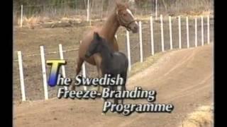 регистрация лошадей