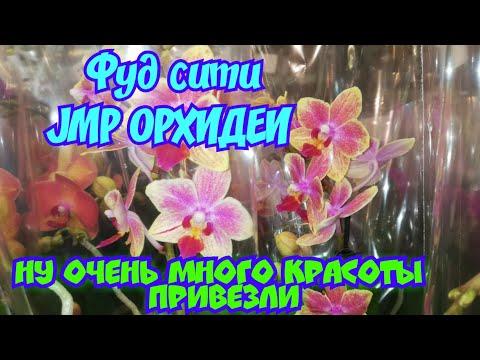 Орхидеи в JMP Ну как устоять и не купить