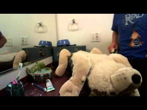 this is how i wash my stuffed animals video 5