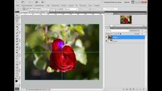 Как создать простой коллаж из фотографий в фотошопе