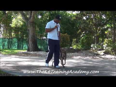 Bonnie & Clyde Basic Obedience - The K9 Training Academy