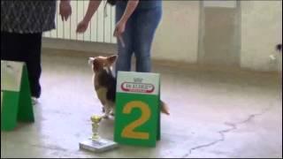 Выставка собак КЦ ''Лосиноостровский'' 27 июля 2013.