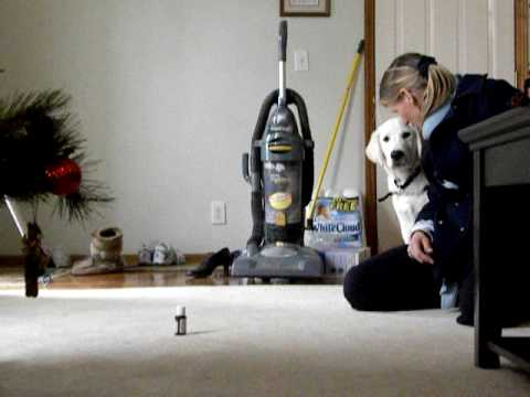 Dog Training Windsor