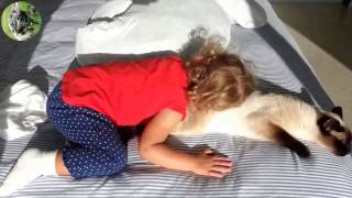Самое смешное видео про кошек и детей. The most funny videos of cats and children