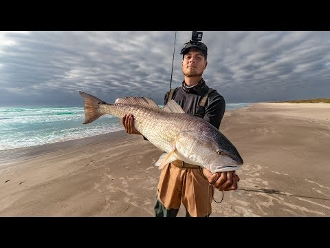 BEACH FISHING FOR BEASTS Using Live Crab And Mullet