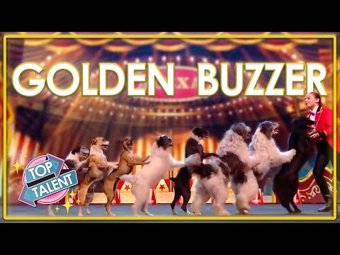 GOLDEN BUZZER | SPECTACULAR DANCING DOG Audition On BGT: The Champions! | Top Talent