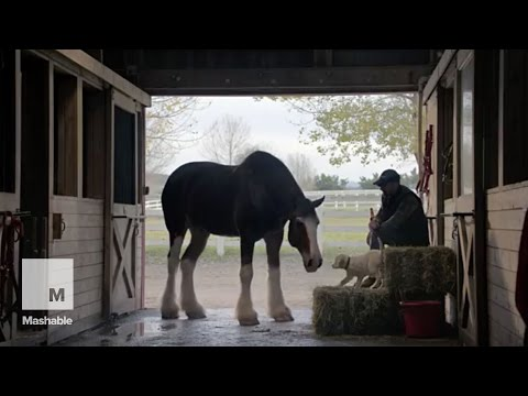 The best of the 2015 Super Bowl commercials | Mashable