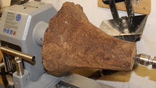 Woodturning - A Dinosaur Foot ( grasstree root )