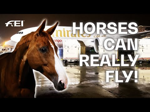 Olympic Dressage Horses arrive in Tokyo! #Tokyo2020