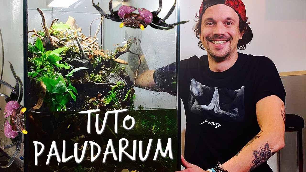 Tuto Paludarium Un Paradis Pour Mes Crabes Vampires Toopet
