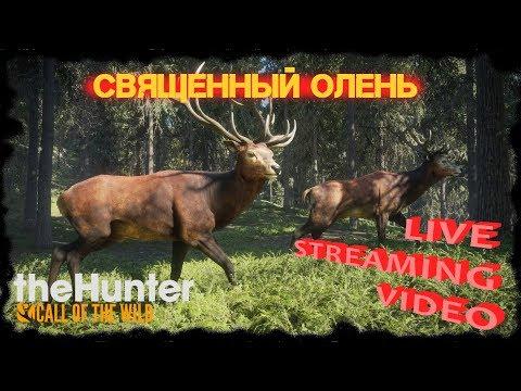 Убийство священного оленя [the Hunter: Call Of The Wild ОнЛайн СТРИМ]