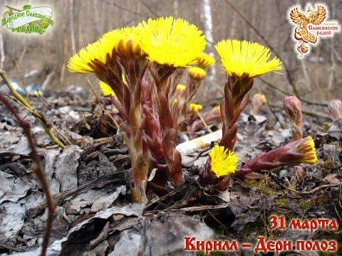 Целебные листья. Какие лекарственные растения растут у нас