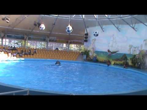 Дельфинарий Немо Ереван 2  29