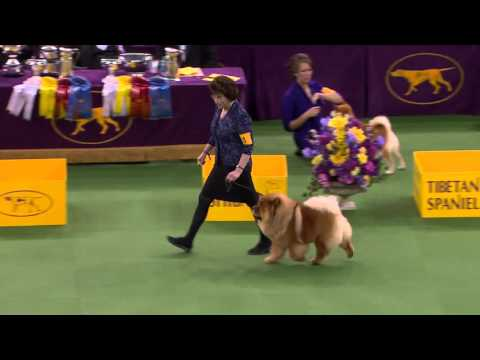 Non Sporting Group Westminster Kennel Club Dog Show 2016