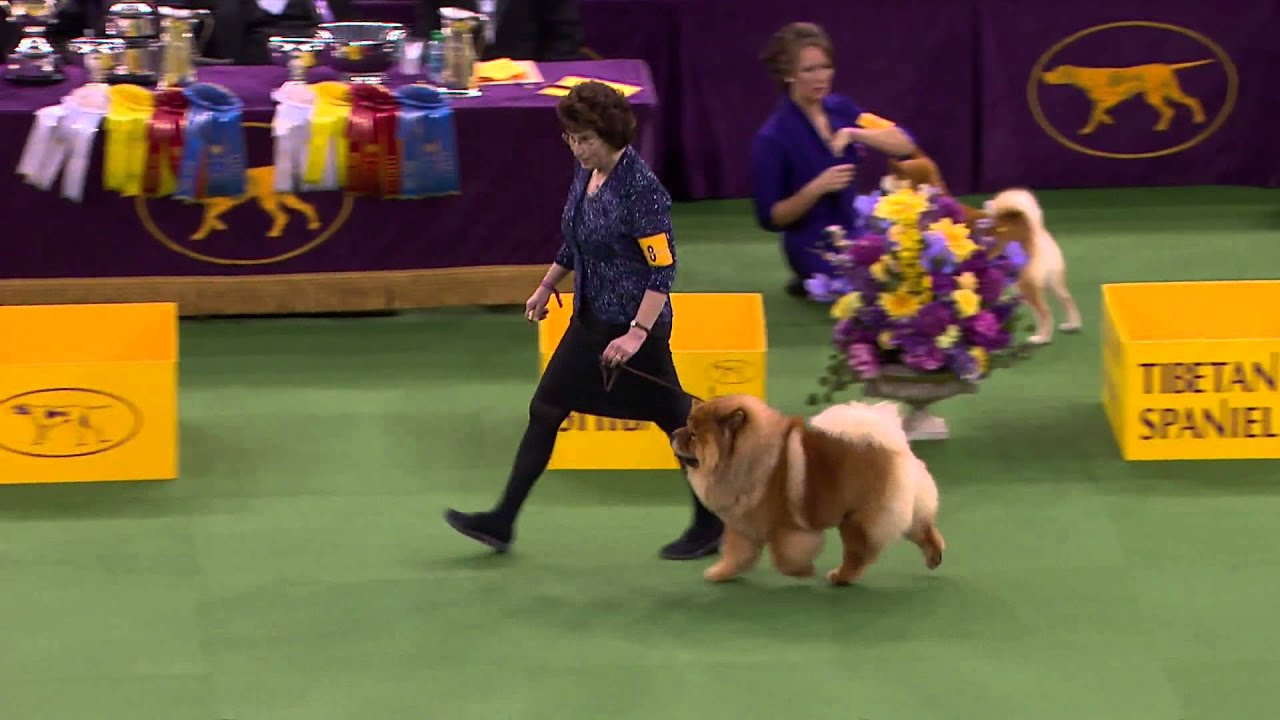 Westminster Dog Show Toy Group Youtube
