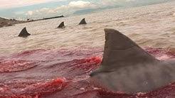 Der Weiße Hai - Gefährlichste Raubtiere Australiens (DOKU)