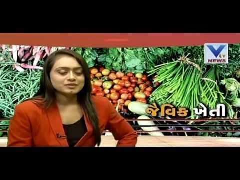 Benefits of  Organic farming | VTV Gujarati | Kheti
