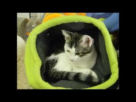 Cats In Bags, Boxes & Things - Music By Barnes & Barnes