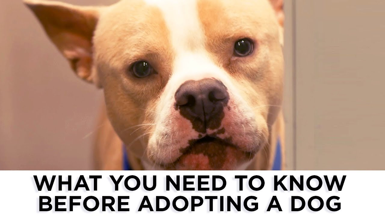 Pet adoption: Are you ready?